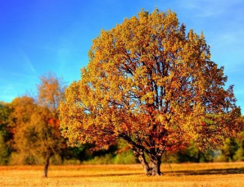Baltimore County's Backyard Trees Program